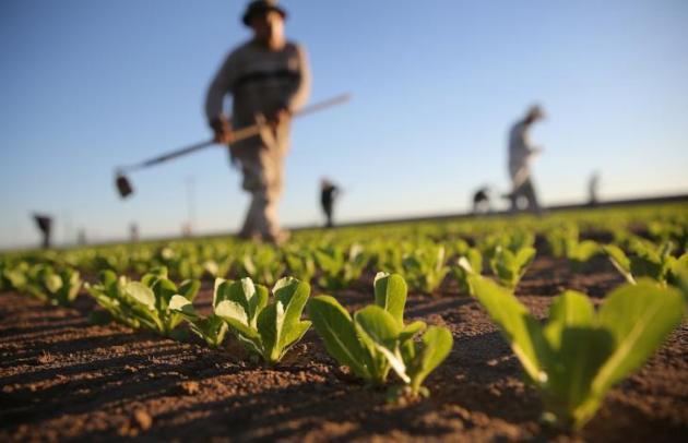 Una cultura agraria che scruta il cielo